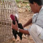 BAN BUNG shopping di un gallo